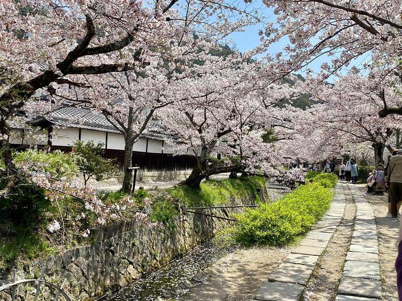 Chemin des philosophes, Kyoto
