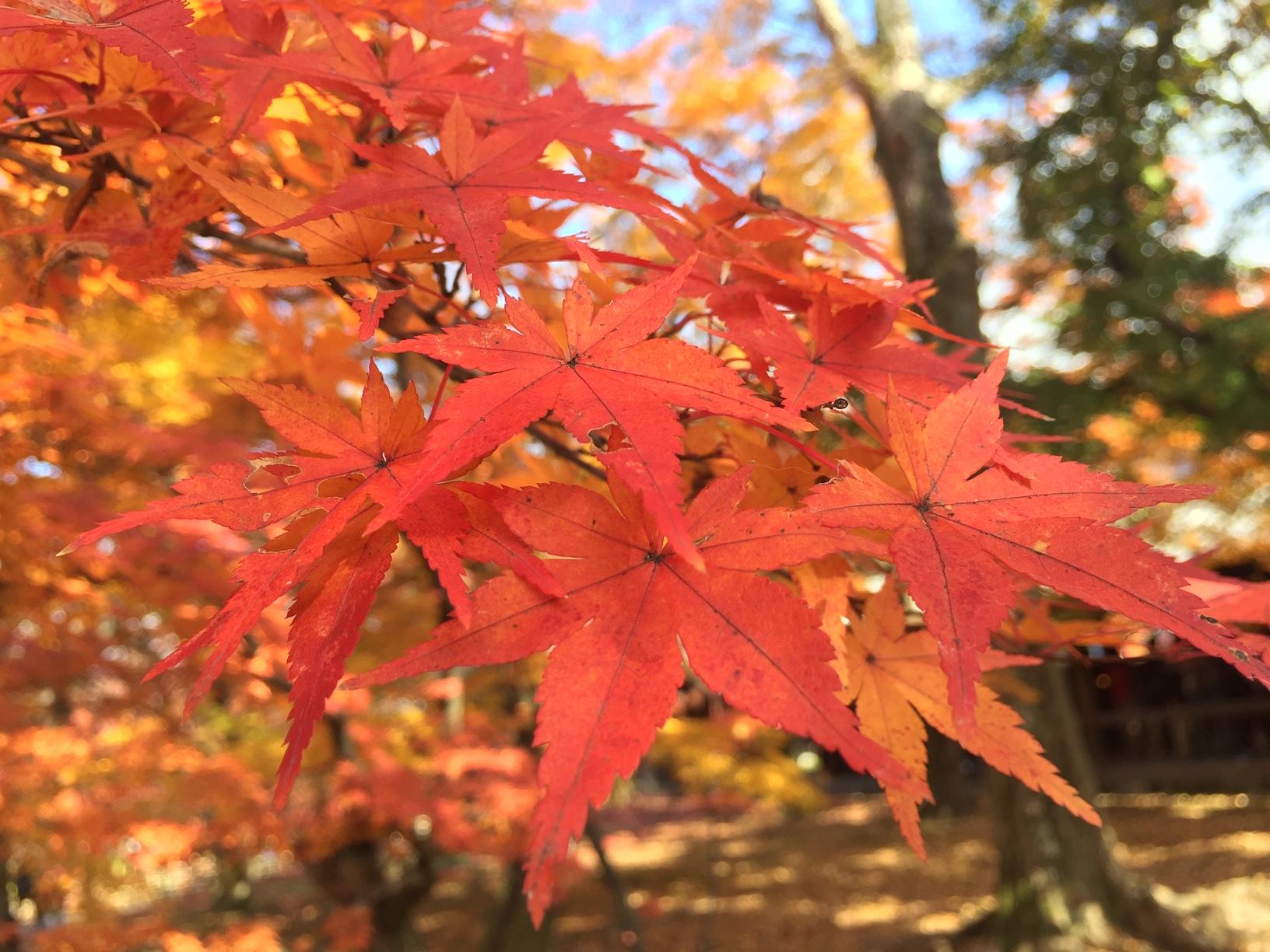 automne kyoto