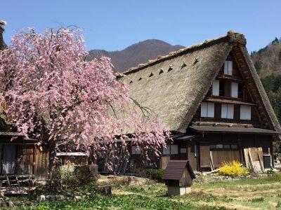 Shirakawago spring_01