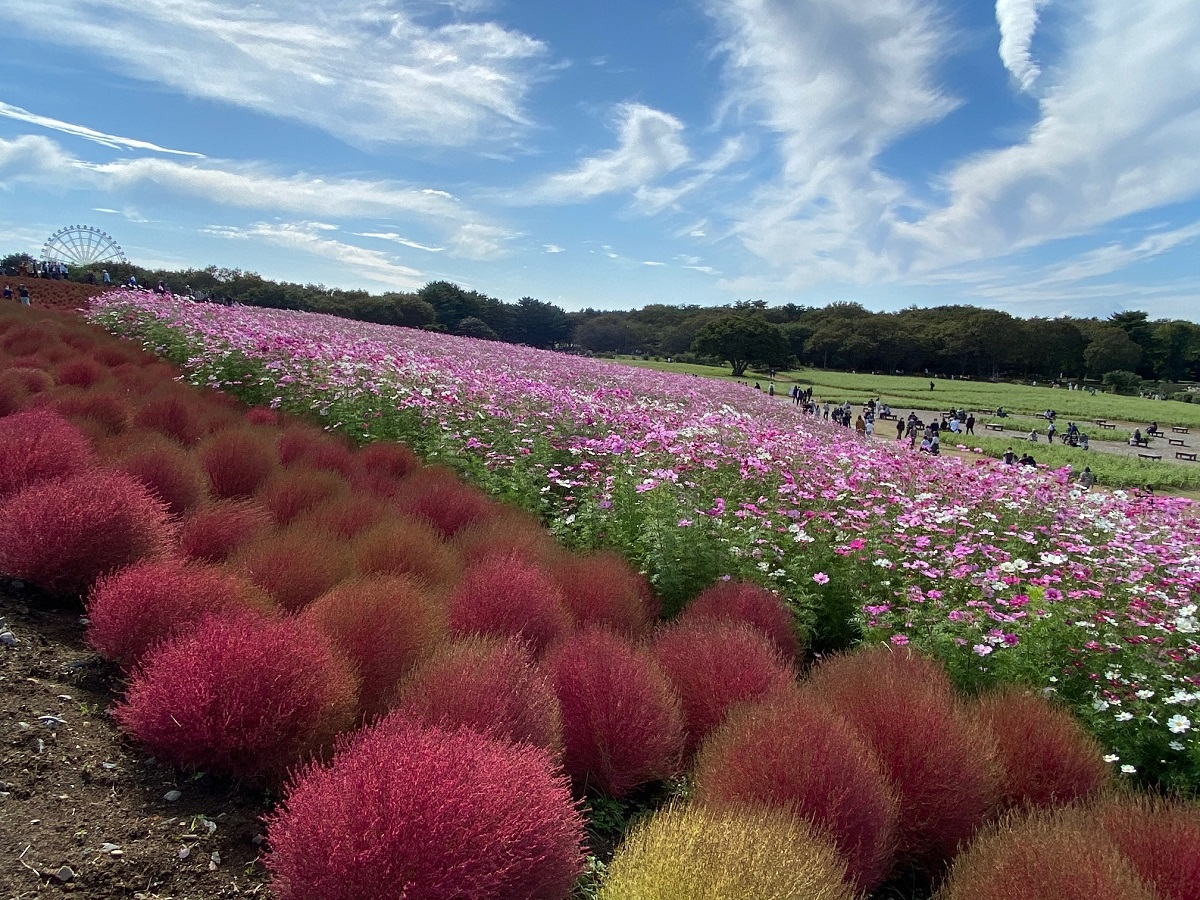 Hitachi Seaside Park en automne