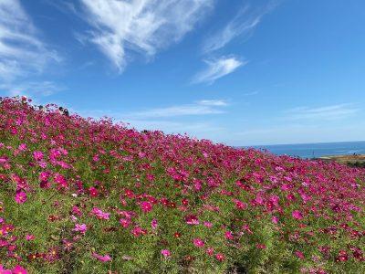 Hitachi Seaside Park ひたち海浜公園