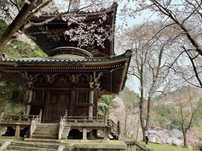 Le mont Yoshino 吉野山