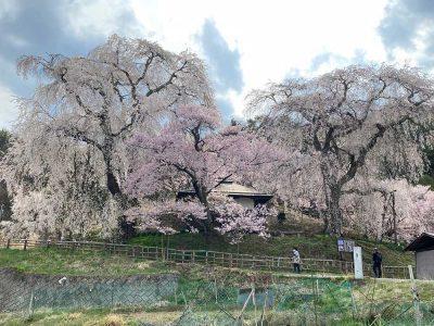 Parc Takatojoshi-koen 高遠城址公園